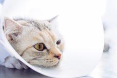 Cat wearing a protective buster collar. Sick cat. Cat wearing a protective buster collar also known as an elizabethan Collars royalty free stock photos