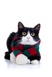 Cat wearing a red and green scarf Royalty Free Stock Image
