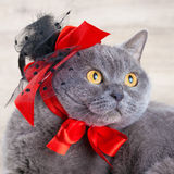 Cat wearing red hat Royalty Free Stock Photo
