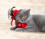 Cat fashionista. Cat wearing red hat on a wood background stock photo