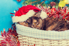 Cat wearing Santa hat  in a basket Stock Images