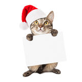 Cat Wearing Santa Hat Carrying Blank Sign Stock Image