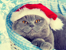 Cat wearing Santa hat Royalty Free Stock Images