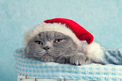 Cat wearing Santa hat Stock Images