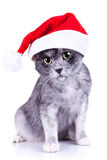 Cat wearing a santa hat looking to the camera Stock Images