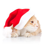 Cat wearing a santa hat and looking to a side Royalty Free Stock Photo