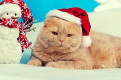 Cat wearing Santa hat Stock Photography