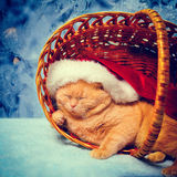 Cat wearing Santa hat Royalty Free Stock Image