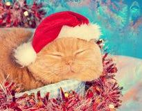 Cat wearing santa hat Royalty Free Stock Photos