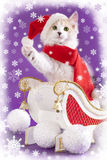Cat wearing a santa hat Royalty Free Stock Image