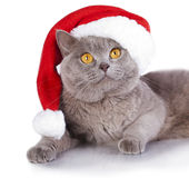 Cat wearing a santa hat Stock Photo