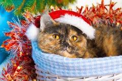 Cat wearing Santa's hat Royalty Free Stock Photos
