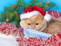 Cat wearing Santa's hat Stock Photography