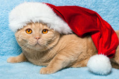 Cat wearing Santa's hat Royalty Free Stock Photography