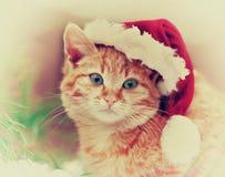 Cat wearing Santas hat Royalty Free Stock Images