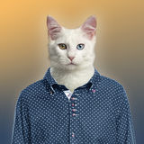 Cat wearing a spotted shirt, colored background Royalty Free Stock Image