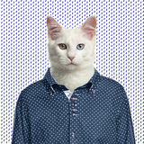 Cat wearing a spotted shirt, spotted background Royalty Free Stock Images