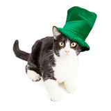 Cat Wearing St Patricks Day Hat Stock Photo