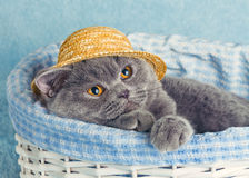 Cat wearing straw hat in a basket Stock Photos