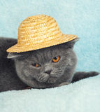 Cat wearing a straw hat Stock Images