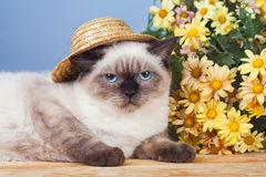Cat wearing straw hat Stock Images