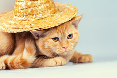 Cat wearing straw hat Royalty Free Stock Photos