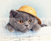 Cat wearing straw hat Stock Photography