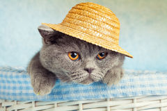 Cat wearing straw hat Stock Image