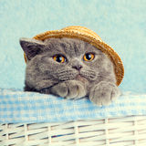 Cat wearing straw hat Royalty Free Stock Photography