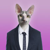 Cat wearing a suit Stock Photography