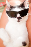 Cat wearing sunglasses. Young cat wearing dark sunglasses and  sleeping on his owners laps Royalty Free Stock Photo