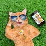 Cat wearing sunglasses . Royalty Free Stock Photo