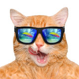 Cat wearing sunglasses relaxing in the sea background. Stock Image