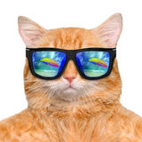 Cat wearing sunglasses relaxing in the sea background. Stock Photo