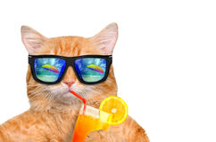 Cat wearing sunglasses relaxing in the sea background. Royalty Free Stock Images