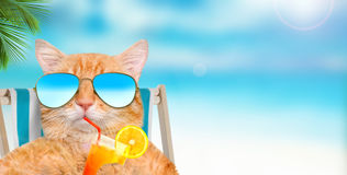 Cat wearing sunglasses relaxing sitting on deckchair. Royalty Free Stock Photo