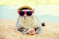 Cat wearing sunglasses and sun hat. Relaxing on the beach royalty free stock image