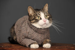 Cat wearing a sweater Royalty Free Stock Photos