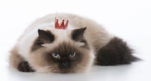 Cat wearing tiara Stock Image