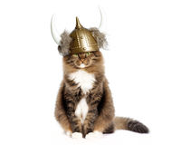 Cat Wearing Viking Helmet. A cat of Norwegian Forest cat mix breed wearing a Viking helmet, cat is sitting on white surface with white background. The Norwegian stock images