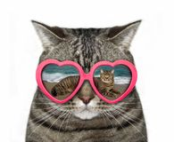 Cat in heart-shaped glasses Stock Images
