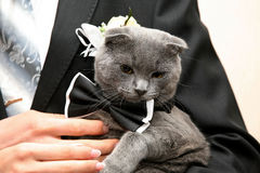 Cat in a wedding dress in the hands of the groom closeup