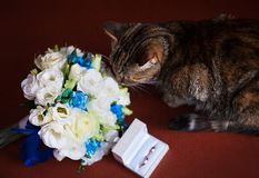 Cat with wedding rings Royalty Free Stock Photos