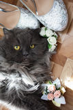 Cat wedding shoes and flowers stock image