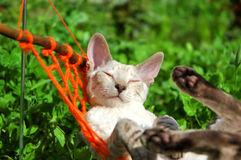 Cat on weekend. White cat relax on orange hammock Stock Photo