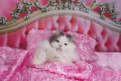 The cat went to bed in a pink bed Stock Photo
