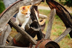 Cat in a wheel. The kitten plays in a wooden wheel Royalty Free Stock Photos