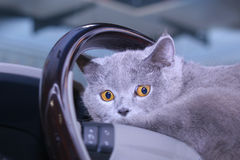 Cat on a wheel Stock Photos