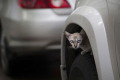 Cat on the wheel. Under the mudguard Stock Images