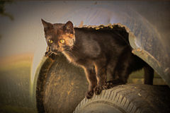 Cat In A Wheel Well. A black cat in the wheel well of an old truck stock photos